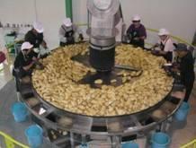 国分酒造 芋焼酎 大正の一滴 25度 1800mlの商品画像|4