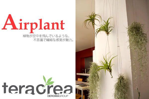 エアプランツ,観葉植物,鉢,プランター,ガーデンルーム