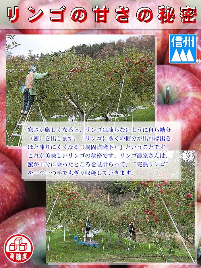 JA千曲 リンゴ
