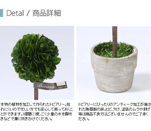 DULTON ダルトン インテリア小物 飾り 装飾品 置物 ボックスウッド トピアリー ボール S CH07-G297S Boxwood topiary Ball 1
