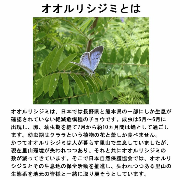 プロトレック 日本自然保護協会コラボレーションモデル PRG-330SD-2JRの商品画像 4