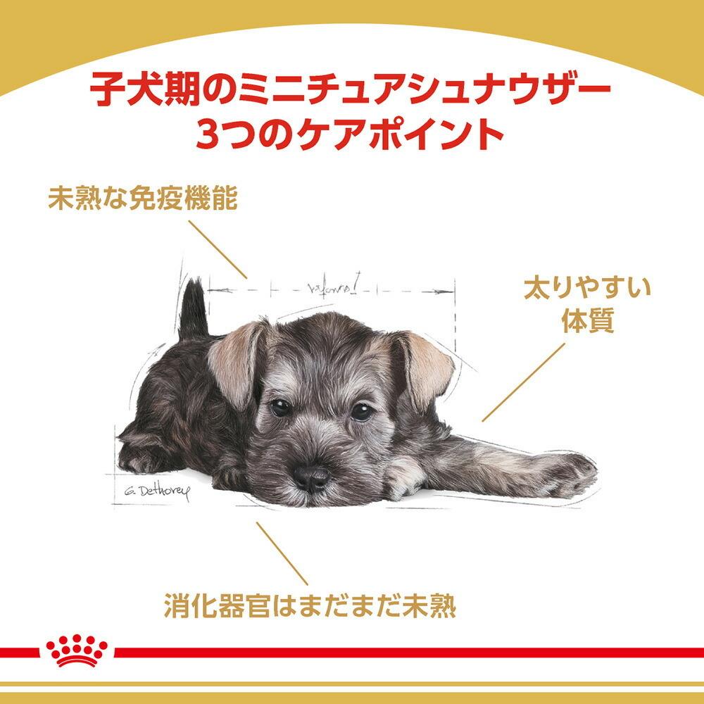 ブリード ヘルスニュートリション ミニチュア シュナウザー 子犬用 1.5kg×1個の商品画像|2