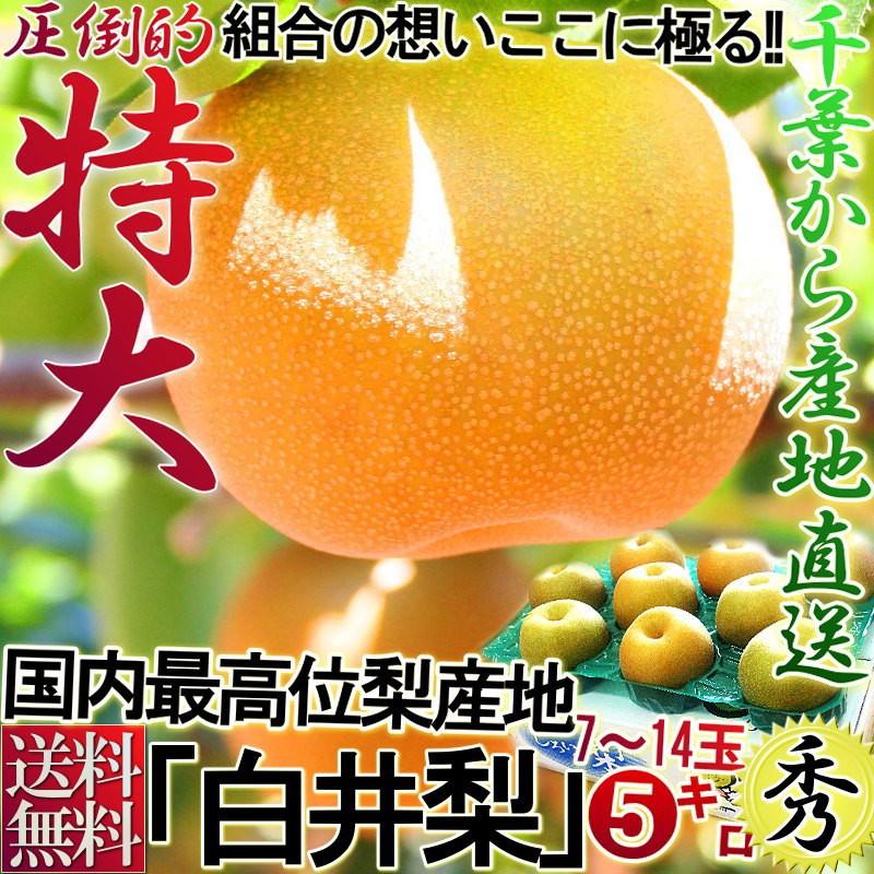 白井梨 フルーツ