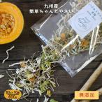 800g 九州産 乾燥野菜(玉ねぎ、大根、ごぼう、キャベツ、カボチャ) 国産 簡単ちゃんとやさい まとめ買い 保存食 野菜 味噌汁 メール便A TSG