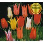 チューリップお徳用 変り咲 百合咲混合 20球 花の大和