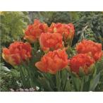 八重枝咲きチューリップ モンテオレンジ 4球 花の大和