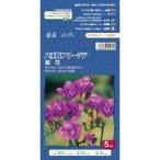 フリージア八重咲き 紫 5球 国華園
