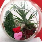 ぬいぐるみ  Valentine Teddy Bear Air Plant Terrarium Kit - Easy to Grow - 5
