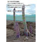 蘆筍 - 【同梱不可・別送】予約受付(発送は5月中旬〜5月下旬) 2L&生産者限定 アスパラ 1kg