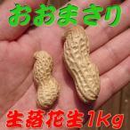 10月中旬より順次発送!『生落花生 おおまさり 1kg』茹で落花生に最適!令和元年千葉県産のジャンボピーナッツ♪
