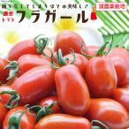 【濃密ミニトマト】フラガール1kg【送料無料】