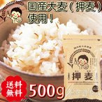 雅虎商城 - 【送料無料】 押し麦 500g 国産 押麦 麦ごはんで食物繊維を食べよう 自然食品