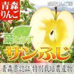 特別栽培 葉とらずサンふじ 家庭用 5C箱
