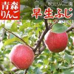 青森りんご 早生ふじ 5kg箱 家庭用 林檎