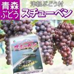 【送料無料】スチューベン 特秀2L&Lサイズ混合 約1.5kg(約5〜7房入) ブドウ ぶどう フルーツ デザート 贈り物 プレゼント ギフト お見舞い 産地直送