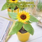 栽培キット Bloom small Himawari ミニヒマワリ栽培セット 「即納」 栽培セット グリーン ハーブ ひまわり ヒマワリ 向日葵 かわいい 可愛い インテリア