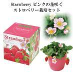 栽培キット Strawberry ピンクの花咲く ストロベリー栽培キット 栽培セット イチゴ いちご 苺 果物 フルーツ 野菜 インテリア 置物 グッズ