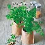 栽培キット 育てるスープ パクチー コリアンダー ミニキャロット 青ネギ ホウレンソウ 栽培セット 種 野菜 ネギ ニンジン ほうれん草 かわいい おしゃれ