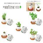 栽培キット eggling eco friendly エッグリング エコフレンドリー 「即納」 ミント イタリアンパセリ バジル カクタス ワイルドストロベリー ラベンダー