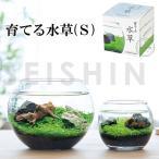 栽培キット 育てる水草(S) 栽培セット 水草 種 流木 植物 かわいい おしゃれ ギフト グリーン インテリア 置物 グッズ