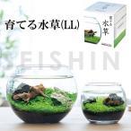 栽培キット 育てる水草(LL) 栽培セット 水草 種 流木 植物 かわいい おしゃれ ギフト グリーン インテリア 置物 グッズ