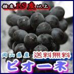 岡山産 ぶどう ピオーネ 大粒3房入 贈答用秀品 ブドウ 葡萄