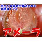 甘さと栄養価が濃縮された高糖度トマト アメーラ 1kg S〜2Sサイズ 16〜20個 化粧箱入