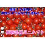 2021年分予約 全額返金保証 甘い 808 ミニトマト 500g 房なし プチトマト フルーツトマト 和歌山産 SSS