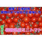 2021年分予約 全額返金保証 甘い 808 ミニトマト 1.5kg 房付き プチトマト フルーツトマト 和歌山産 SSS