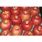 訳あり 長野産 りんご シナノスイート 大玉10kg24個〜28個 入