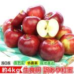(訳あり) 減農薬 長野 生食用 紅玉 りんご 約4kg 小玉16〜30個入 リンゴ 林檎 産地直送 小山