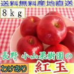 農園より産地直送 長野産 減農薬有機肥料使用 樹上完熟紅玉 ご家庭用 約8kg小玉32〜60個入 完熟 リンゴ りんご 訳あり わけあり品