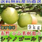 訳あり 減農薬 長野 シナノゴールド りんご 約9kg 16〜50個入 リンゴ 林檎 産地直送 小山 SSS 12t