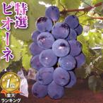 2021年分予約 岡山産 ぶどう ピオーネ 1.8kg 3〜5房 化粧箱入 ブドウ 葡萄 産地直送 SSS 9t