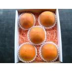 糖度22度 返金保証 和歌山 柿 新秋柿 2L 6玉 約1.3kg 化粧箱 贈答用 SSS