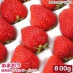 産地直送 低農薬 福岡県産あまおう 贈答用 800g 大粒24〜32玉 化粧箱入 いちご 苺 イチゴ