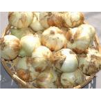 ポイント10倍産地直送 無農薬 有機栽培 熊本県産 新玉ねぎ 5kg サイズ混合(20〜40個入) ご家庭用 訳あり