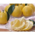 (訳あり)  無農薬 熊本産 ニューサマーオレンジ 約5kg 30〜40玉入 サイズ混合