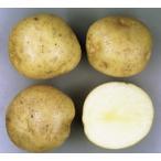 キタアカリ(馬鈴薯)春作ジャガイモ種芋 10kg