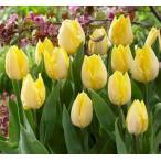8hana-gift_ka-tulips-sunnyprince