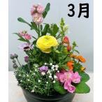 季節の花の寄植え2980  プラ鉢に植え込んで植替え不要でかわいい寄せ植え