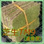 芝生 ティーエムナイン (高麗芝系) TM9 1平米