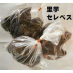 (種芋) 里芋 (セレベス) 約1kg(400g×3袋)
