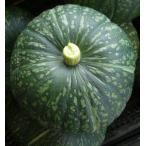 カボチャ 栗かぼちゃ(えびす) LL 1玉 (約2kg〜)  (食用南瓜/兵庫県産)
