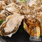 送料無料 北海道厚岸産 殻付き 生牡蠣 10個 Lサイズ(95gから130g) バーベキュー  【冷】 お歳暮 敬老の日