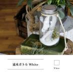 流木ボトル ホワイト 『流木 インテリア 棒 ボトル セット ガラス ディスプレイ オブジェ DIY 素材 一点物 枝 大 中 小 アクセサリー 多肉植物』