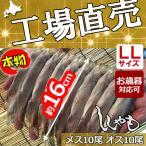 お歳暮 ししゃも シシャモ 北海道産 送料無料 ギフト 本ししゃも 子持ちシシャモ 柳葉魚 干物 大きい オス10尾 メス10尾 工場直送 LL20