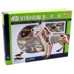 犬 解剖 人形 模型 おもちゃ キット 透明 クリア フィ
