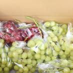 山梨県 甲州 勝沼産 家庭用 シャインマスカット  赤 ブドウ セット 4Kg前後 送料無料 産地直送 数量限定