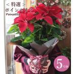 【クリスマスバージョン寄せ鉢】あすつく セール 鉢花 ギフト お祝 記念日 スタッフにお花はお任せ「クリスマスおまかせ寄せ鉢セット3500円」